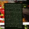 کتاب پرورش توت فرنگی ارگانیک