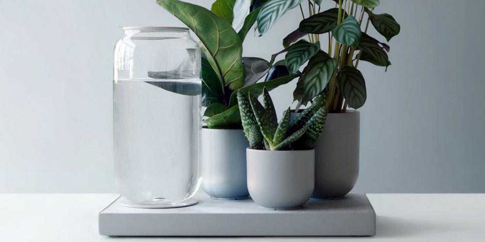 تبلو آبیاری خودکار گیاهان خانگی