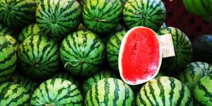 معرفی گیاه هندوانه کشاورزی آبیاری نوار تیپ