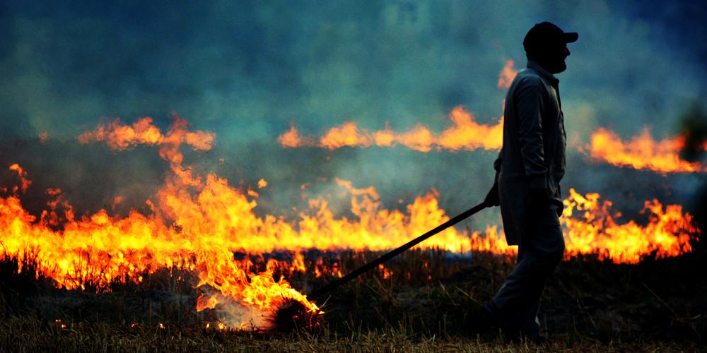آیا باید بقایای گیاهان را پس از برداشت سوزاند؟