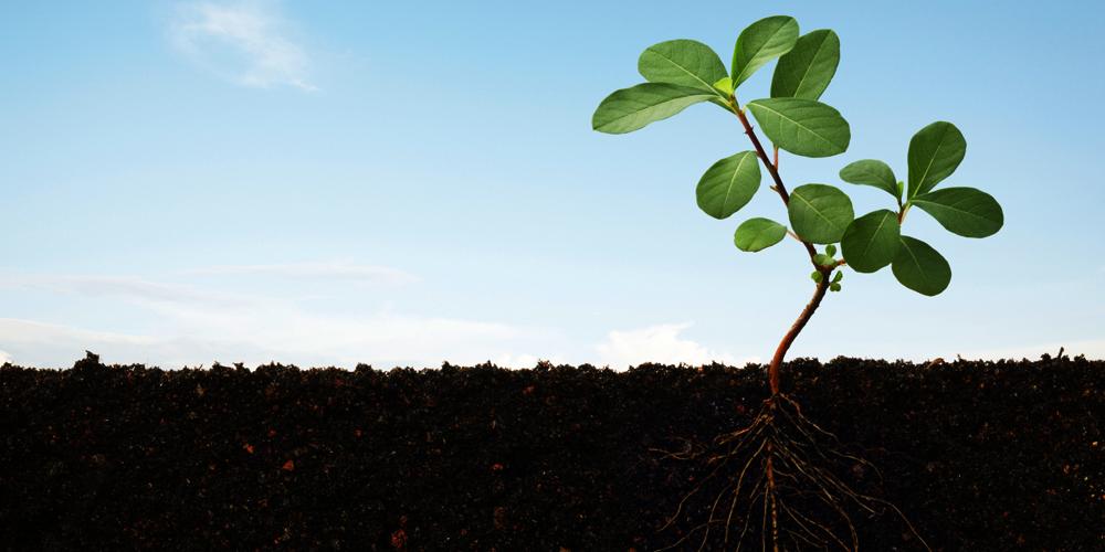 توسعه ریشه با آبیاری بهترین زمان آبیاری مقاومت گباه