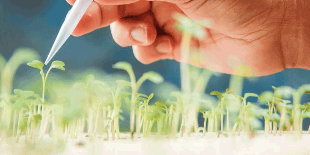 فناوری نانو در آبیاری و آبرسانی نانو تکنولوژی