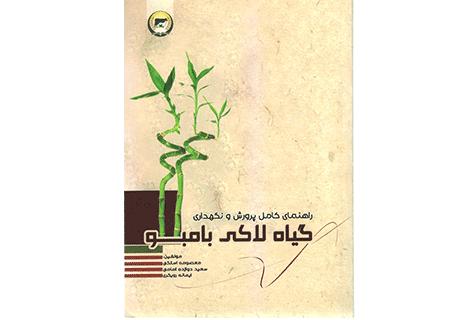 آبیاری بامبو آموزش کشاورزی کتاب پرورش و نگهداری گیاه لاکی بامبو
