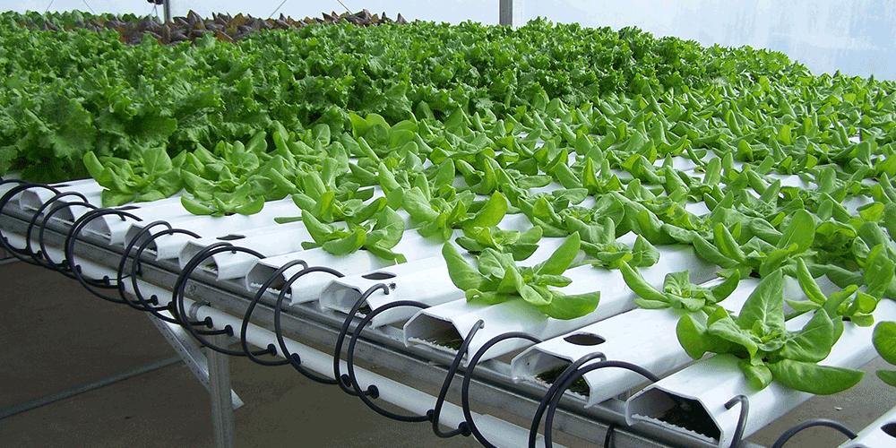 ابیاری کتاب محصولات گلخانه ای کشت هیدروپونیک