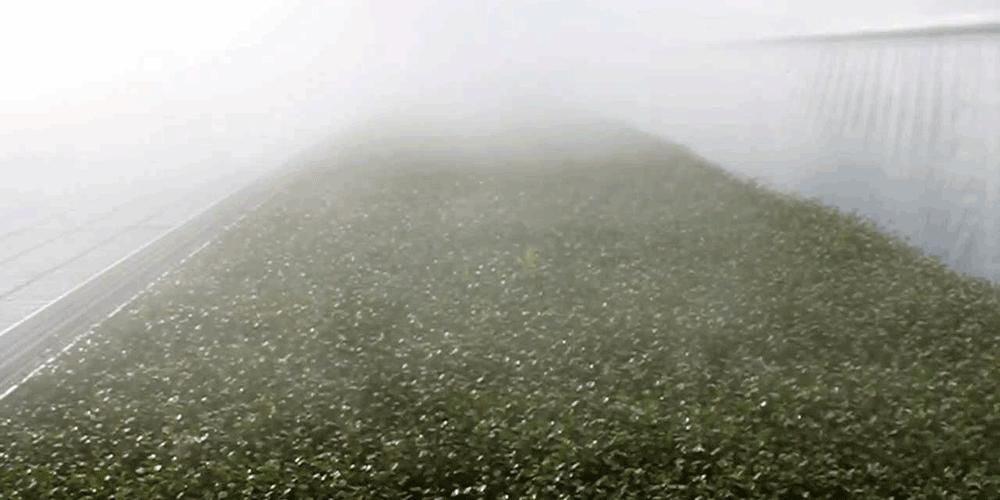 سیستم مه پاش چیست و نحوه ی کارکرد آن چگونه است؟