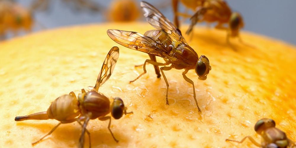 """""""تکنولوژی های جدید کشاورزی- حذف مدیریت شده آفات و حشرات موذی"""" is locked تکنولوژی های جدید کشاورزی- حذف مدیریت شده آفات و حشرات موذی"""
