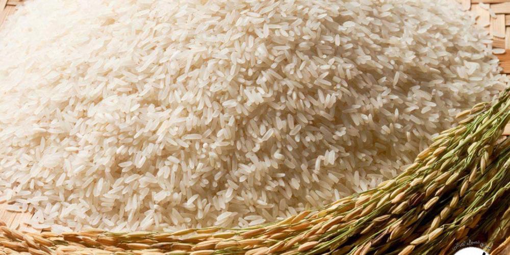 برخی از نکاتی که هنگام کاشت برنج باید به آنها توجه نمود: