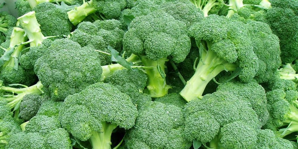 کلم بروکلی چگونه گیاهی است ؟