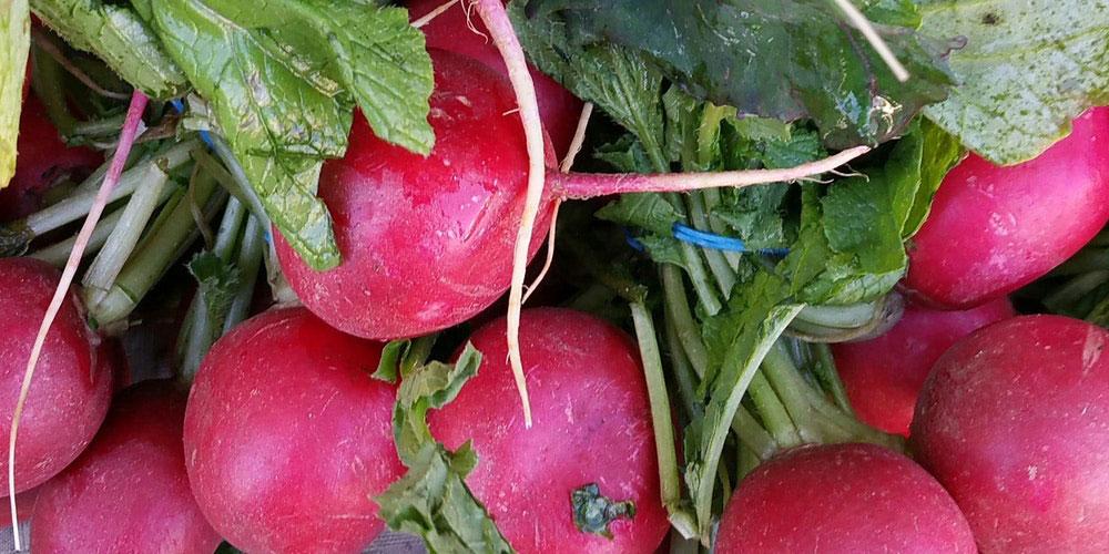 سبزیجات مناسب برای کشت پاییز و زمستان