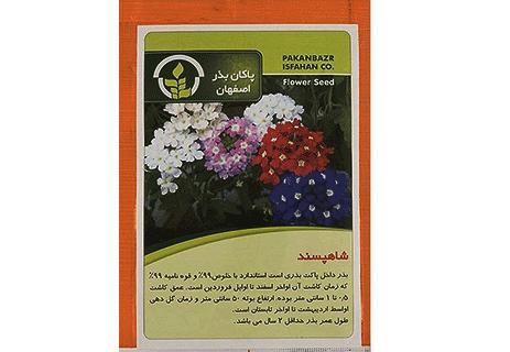 بذر گل شاه پسند - شاهپسند
