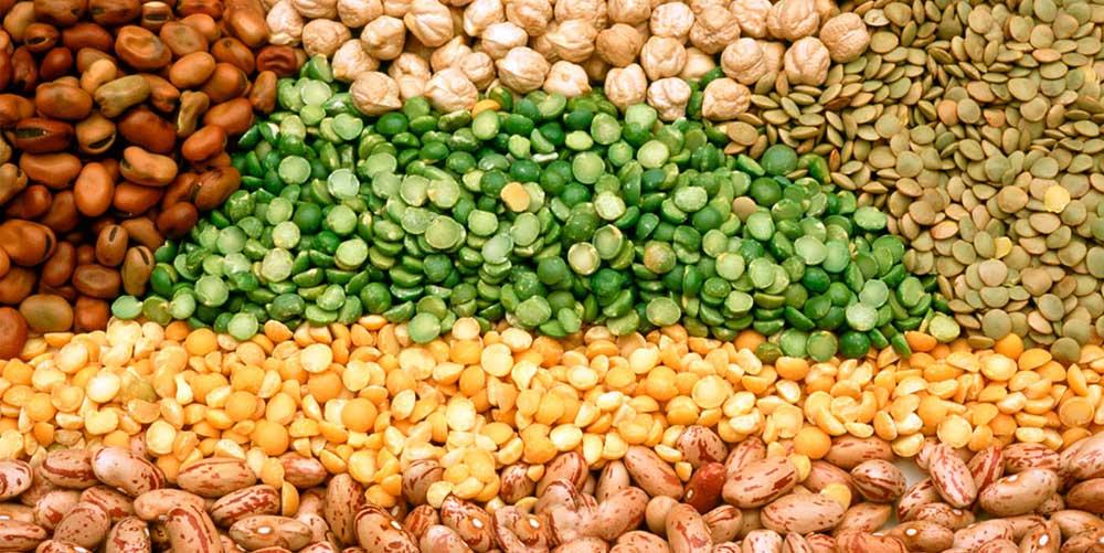 چگونه بذر بخریم انتخاب بذر بذر گیاهان