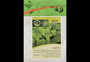 بذر بادرنجبویه - پاکان بذر