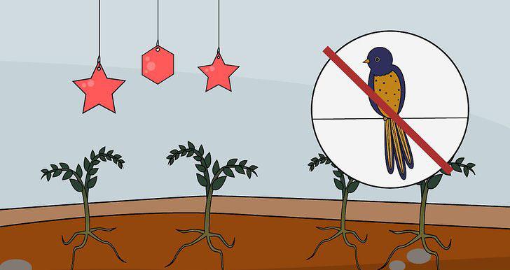 کشت گوجه فرنگی کاشت گوجه فرنگی گوجه فرنگی با کیفیت