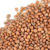 بذر تربچه بذر خانگی تربچه قیمت بذر تربچه بذر انواع تربچه