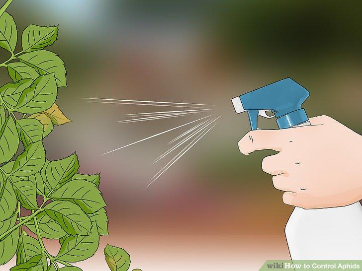 چگونه شته ها را کنترل کنیم