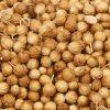 بذر گیشنیز بذر مرغوب گیشنیز قیمت مناسب بذر گیشنیز