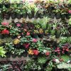 گلدان دیواری تیاب مخصوص دیوار سبز