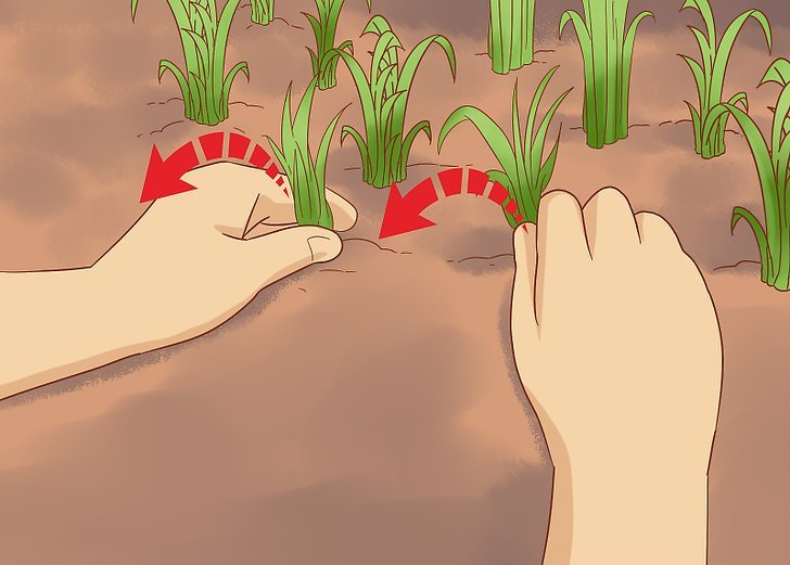 کاشت خیار کاشت خیار با بذر کاشت خیار در خانه