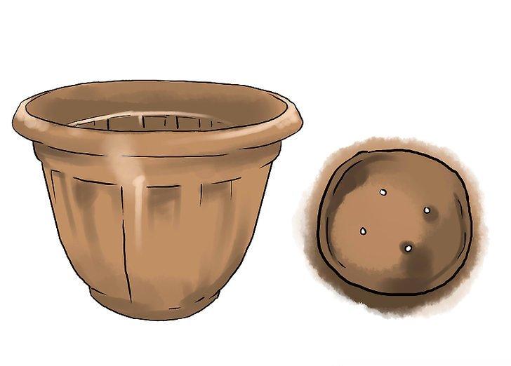 چگونه بادمجان را در گلدان پرورش دهیم