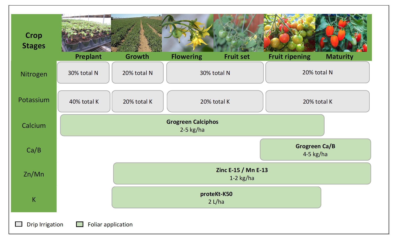 نمودار نیاز گیاه گوجه فرنگی به مواد معدنی در طور دوره رشد