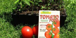 مواد معدنی موثر در رشد گوجه فرنگی