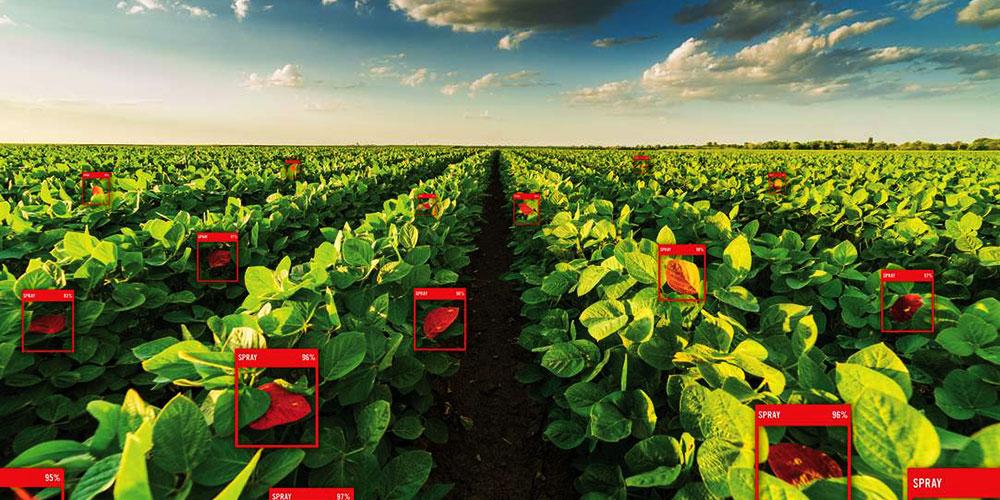 هوش مصنوعی در کشاورزی: ریشه کردن بذر شک - قسمت اول